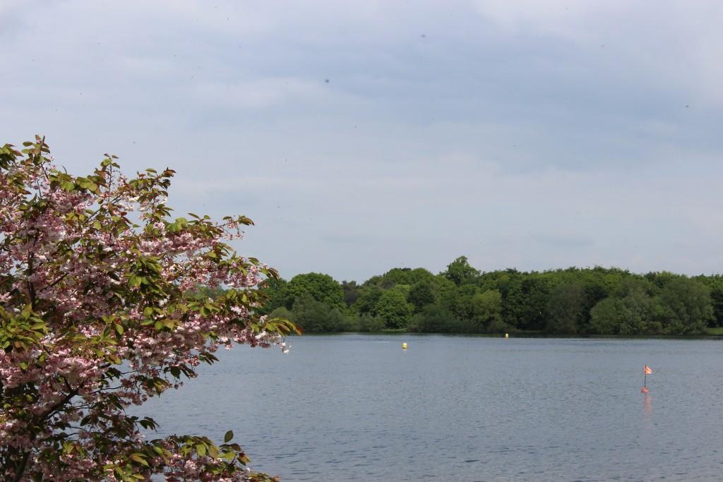 Springtime view across Alton Water