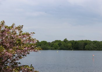Springtime view across Alton Water