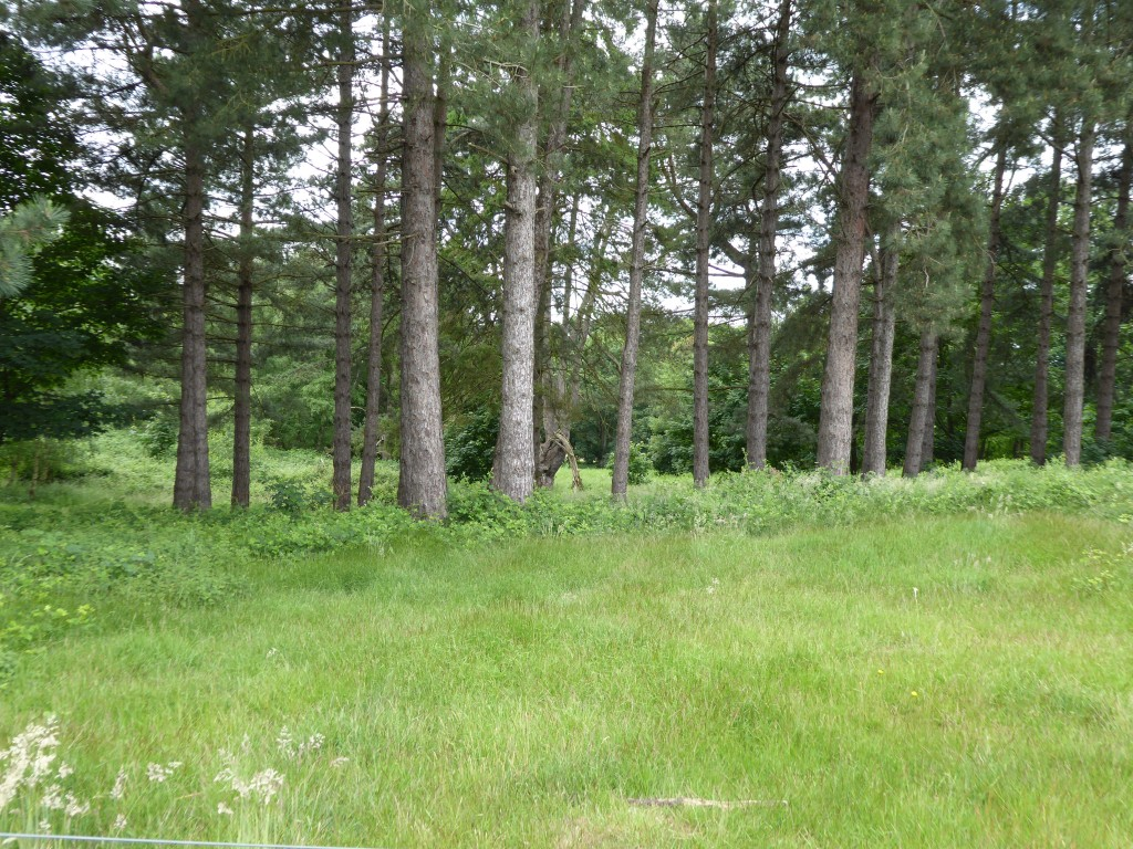 Sutton Hoo woodland