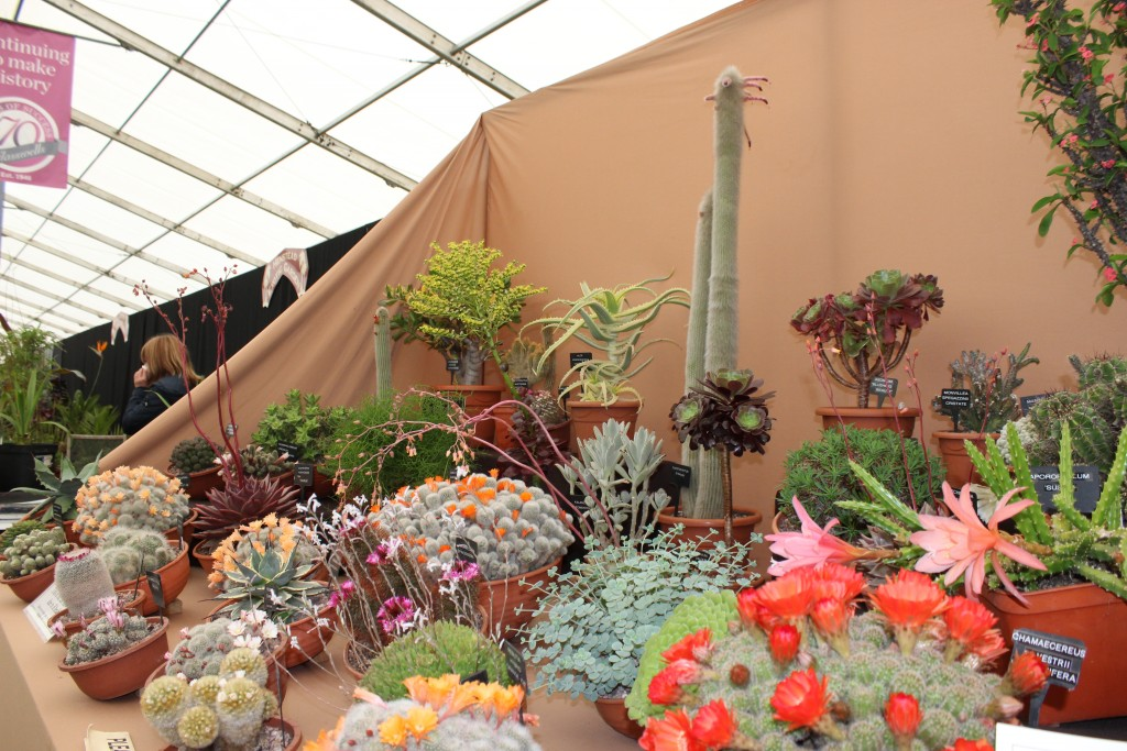 Suffolk Show cactus display