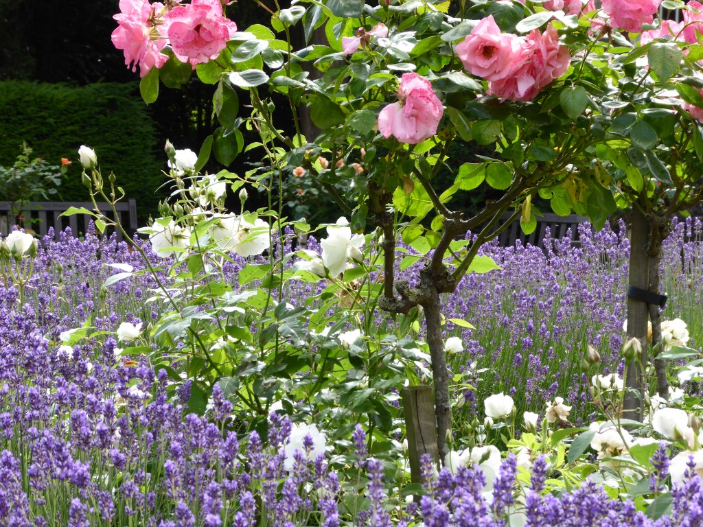 Appleby Rose Garden, Abbey Gardens