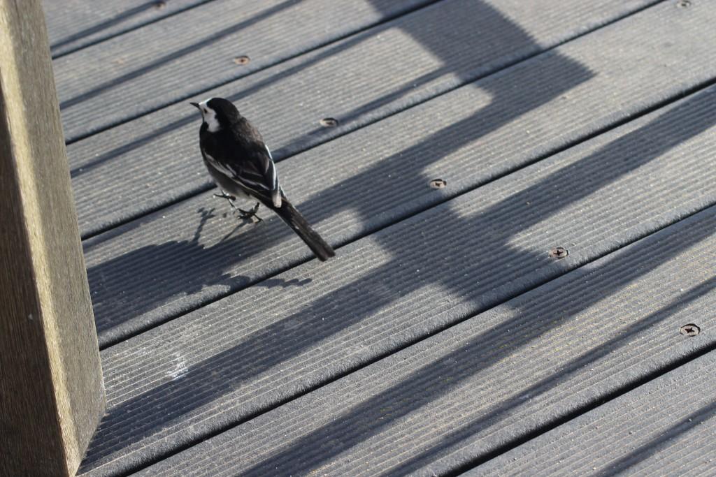 Bird at Port of Felixstowe