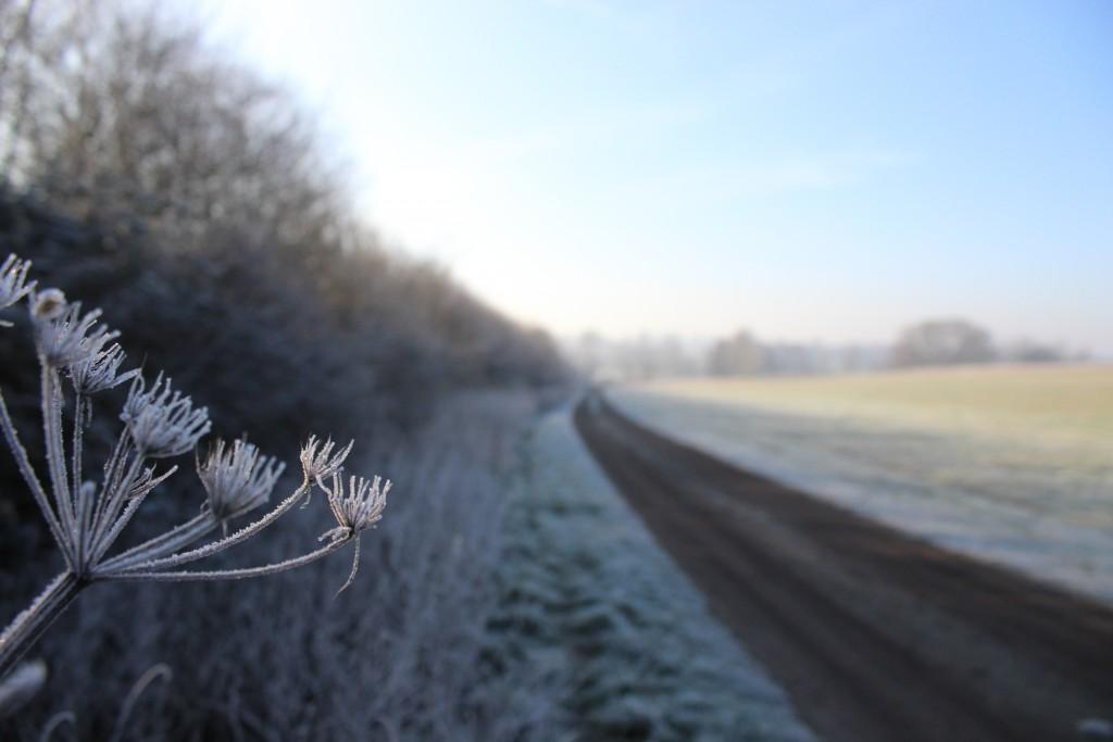 Suffolk frost