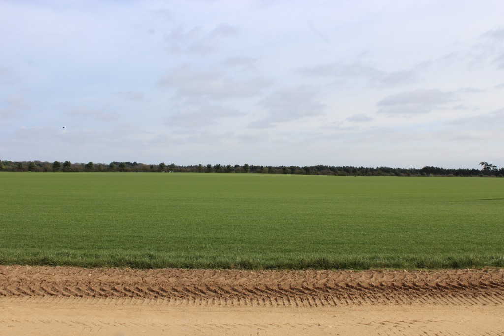 Fields surrounding Sutton Hoo