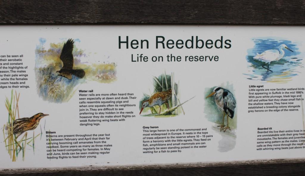 Hen Reedbeds