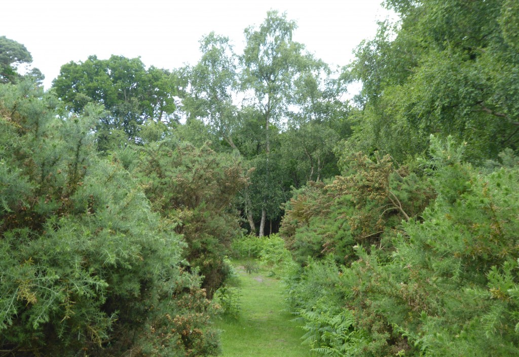Captain's Wood